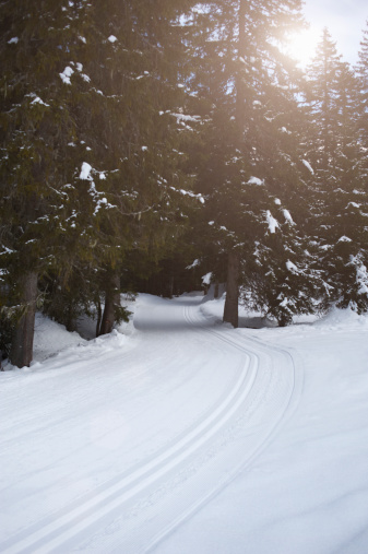Ski Track「Tracks through snow leading into forest」:スマホ壁紙(16)
