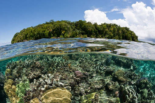 Shallow「Corals on Reef Top, Solomon Islands」:スマホ壁紙(2)