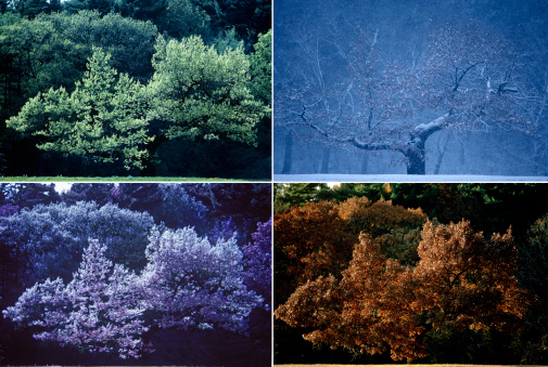 Four Seasons「Four seasons of Oak tree」:スマホ壁紙(16)
