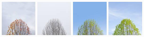 Four season montage of tree.:スマホ壁紙(壁紙.com)