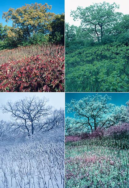 Four seasons of oak and sumac:スマホ壁紙(壁紙.com)