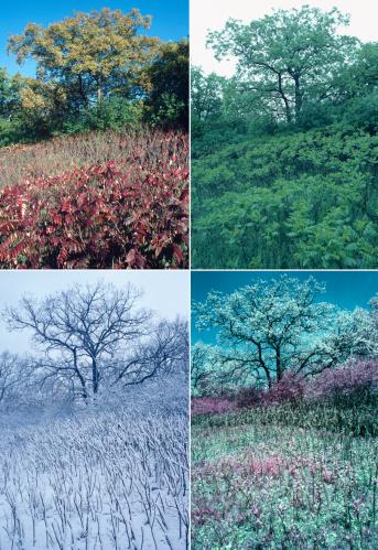 春「Four seasons of oak and sumac」:スマホ壁紙(1)