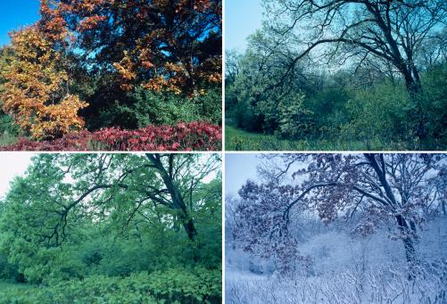 Four Seasons「Four seasons of oak and sumac」:スマホ壁紙(15)