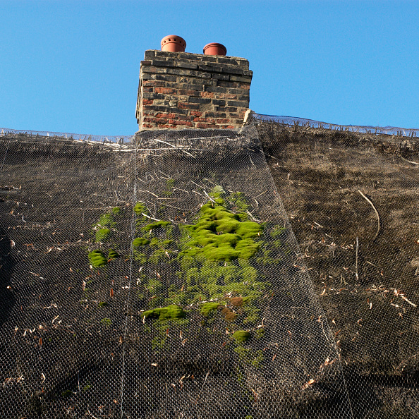 Aging Process「Moss appearing on a thatched cottage roof」:写真・画像(17)[壁紙.com]