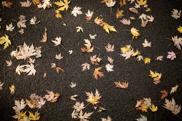 秋「Autumn Colours Begin To Show」:写真・画像(15)[壁紙.com]