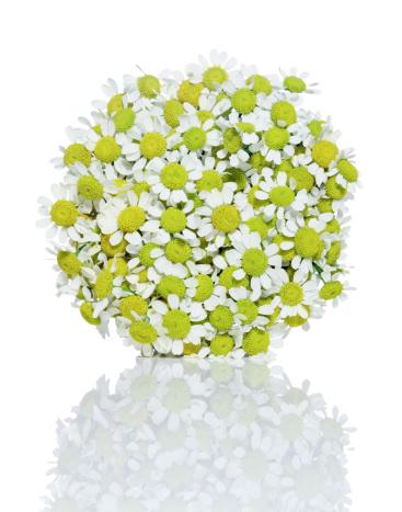 flower「Daisy Flower Bunch」:スマホ壁紙(7)