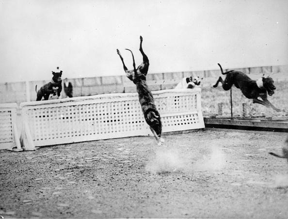 Sports Track「Dive! Doggy! Dive!」:写真・画像(2)[壁紙.com]