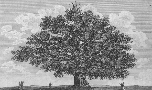 Engraving「The Penshurst Oak」:写真・画像(15)[壁紙.com]