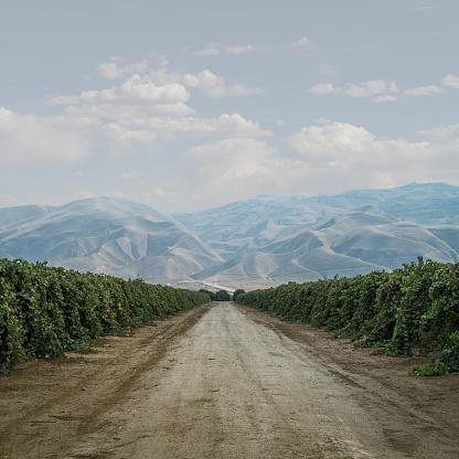 Dramatic Landscape「Road Through Grape Vines」:スマホ壁紙(12)