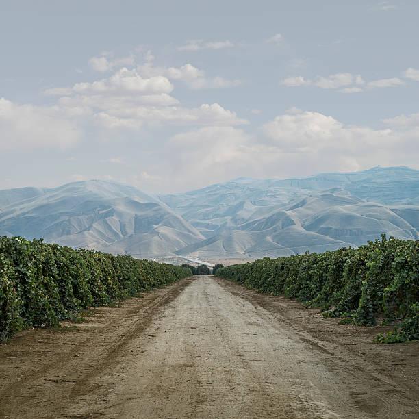 Road Through Grape Vines:スマホ壁紙(壁紙.com)