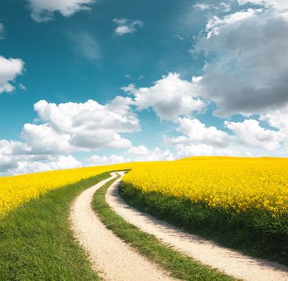 Green Color「Road Through The Oilseed Rape Field」:スマホ壁紙(12)