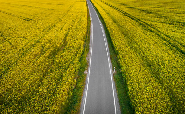 Road through rape fields from above:スマホ壁紙(壁紙.com)