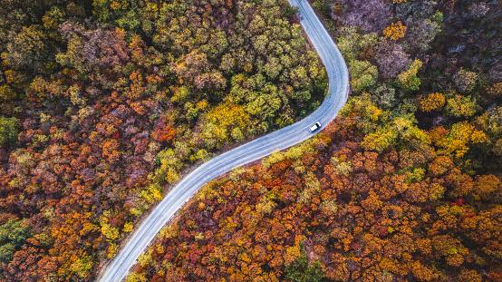 Winding Road「Road through forest」:スマホ壁紙(2)