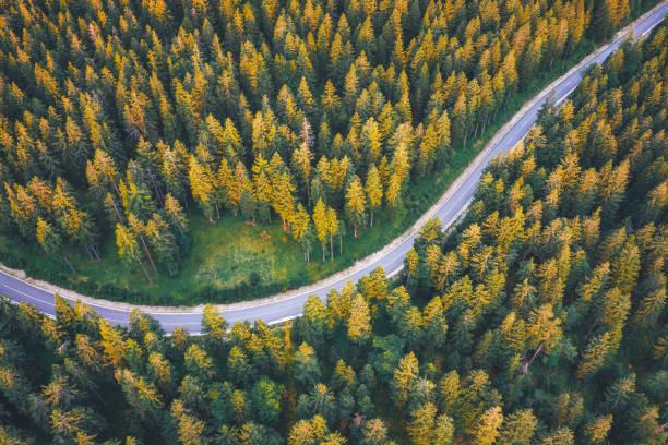 Road Through The Pine Forest:スマホ壁紙(壁紙.com)