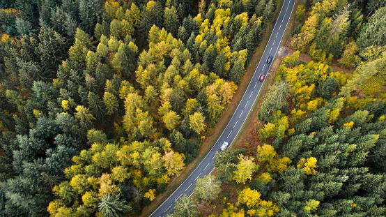 Dirt Road「Road through autumnal forest」:スマホ壁紙(0)