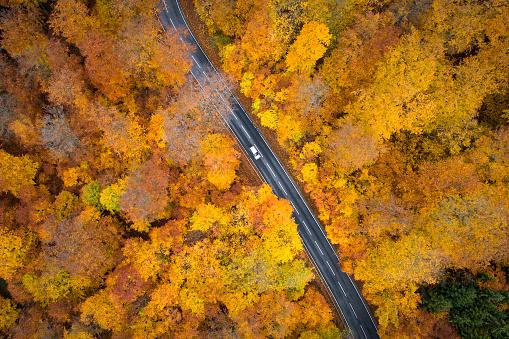 松林「秋の森 - 空撮道路」:スマホ壁紙(14)
