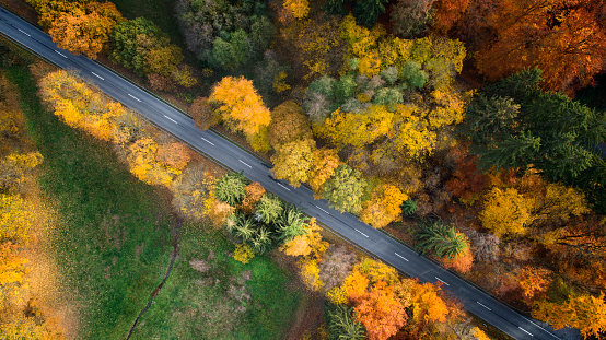Dividing Line - Road Marking「Road through autumnal forest - aerial view」:スマホ壁紙(8)