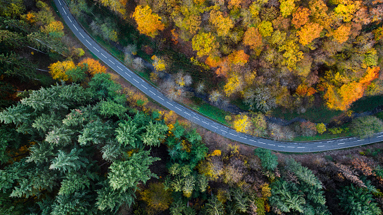 Dividing Line - Road Marking「Road through autumnal forest - aerial view」:スマホ壁紙(7)