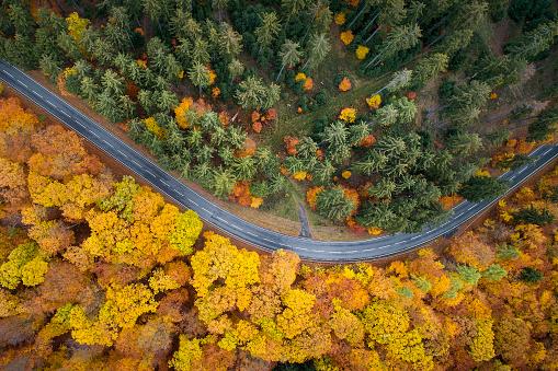 秋「秋の森 - 空撮道路」:スマホ壁紙(8)