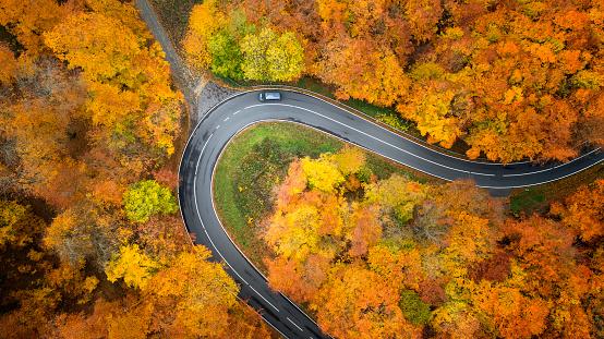 Dirt Road「Road through autumnal forest - aerial view」:スマホ壁紙(14)