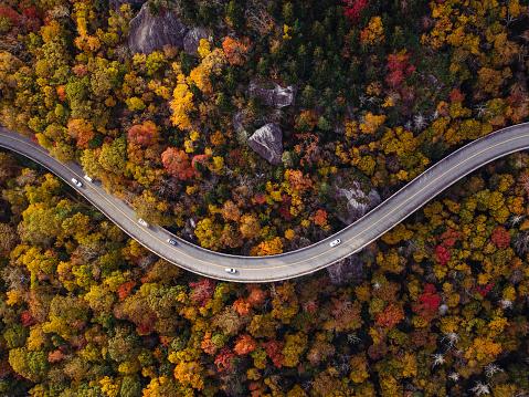 秋「車で森の中の道」:スマホ壁紙(6)
