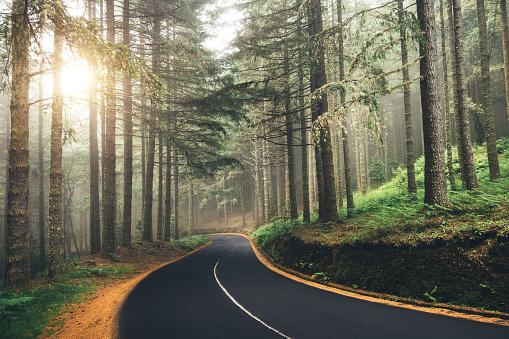 Madeira Island「Road Through The Forest」:スマホ壁紙(11)