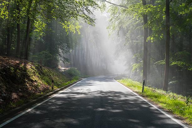 Road through forest with haze and sunbeams:スマホ壁紙(壁紙.com)