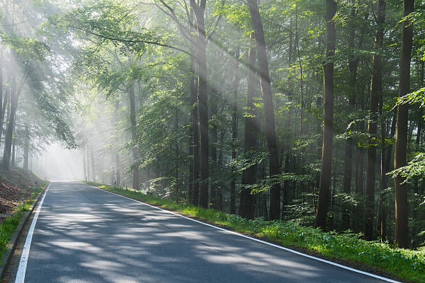 Road through forest with haze and sunbeams:スマホ壁紙(壁紙.com)