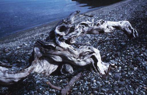 Steep「Driftwood on rocky slope by lake」:スマホ壁紙(16)