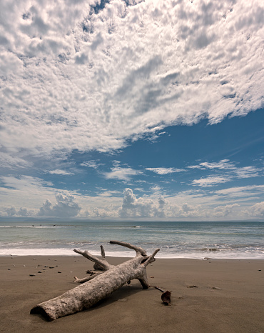 Sea「Driftwood on the Beach, Corcovado National Park, Osa Peninsula, Costa Rica」:スマホ壁紙(4)