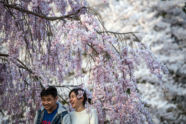 Couple - Relationship「People Enjoy Cherry Blossom In Japan」:写真・画像(14)[壁紙.com]