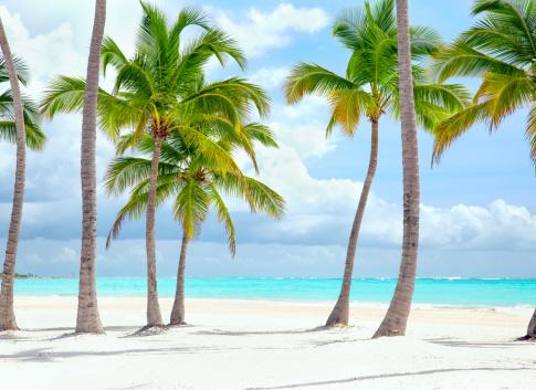 ココヤシの木「キャップカナ海岸」:スマホ壁紙(5)