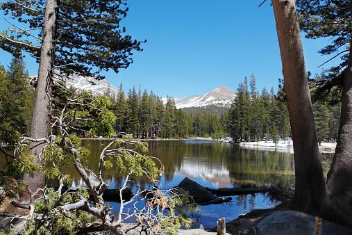 インヨー国有林「Small lake reflecting MtGibbs in Yosemite Park」:スマホ壁紙(3)
