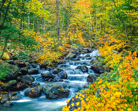 Sugar maple「Autumn colors Underhill State Park Green Mountains, VT」:スマホ壁紙(13)