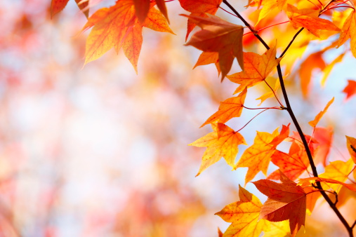Autumn leaves「Autumn Colors」:スマホ壁紙(4)