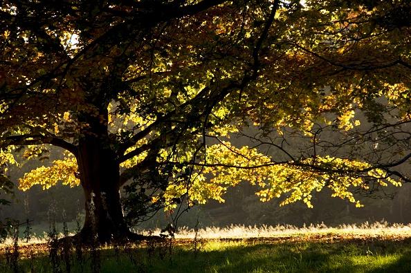 葉・植物「Autumn Colour In The Park Of Kenwood House」:写真・画像(6)[壁紙.com]