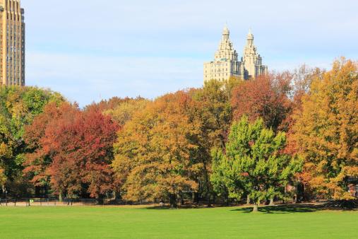 紅葉「Autumn color trees at Sheep Meadow.」:スマホ壁紙(2)