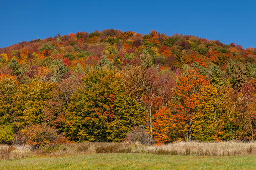 生い茂る「Autumn color in foliage, Vermont, New England」:スマホ壁紙(15)