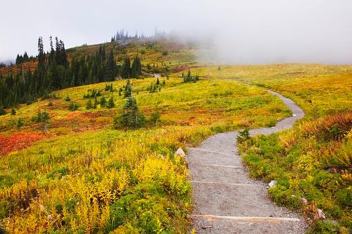 レーニア山国立公園「Autumn colours and fog with a winding path on mount rainier in mount rainier national park; washington state united states of america」:スマホ壁紙(14)