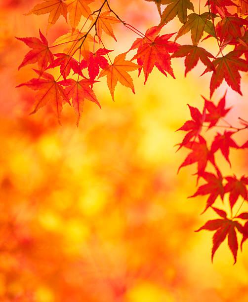 秋の色:スマホ壁紙(壁紙.com)