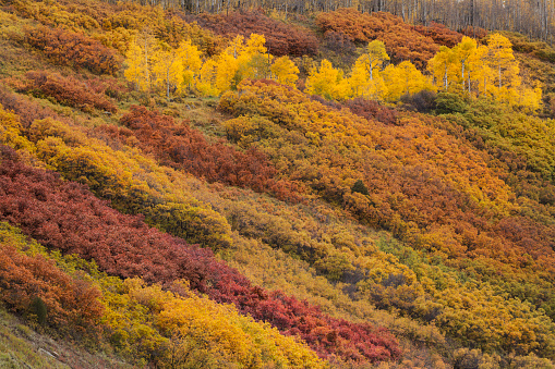 オーク林「Autumn colors decorate a mountain side in Colorado」:スマホ壁紙(1)