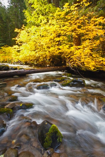 Willamette National Forest「Autumn Colours Along Santiam River In Willamette National Forest」:スマホ壁紙(17)