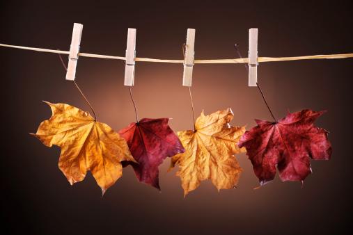 セイヨウカジカエデ「垂れ下がる秋の色のメープルの葉に洋服ライン」:スマホ壁紙(3)