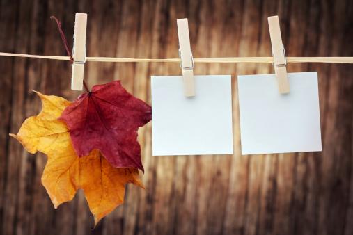 セイヨウカジカエデ「垂れ下がる秋の色のメープルの葉に洋服ライン」:スマホ壁紙(8)