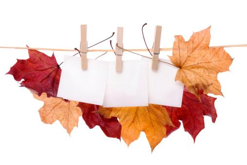 セイヨウカジカエデ「垂れ下がる秋の色のメープルの葉に洋服ライン」:スマホ壁紙(10)