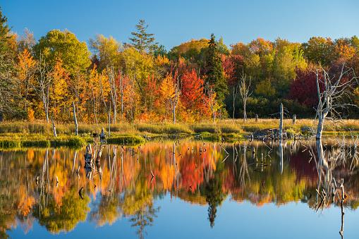 紅葉「静かな湖の秋」:スマホ壁紙(12)