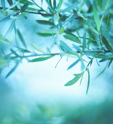 Green Background「Green Nature Background with Willow Branches」:スマホ壁紙(4)