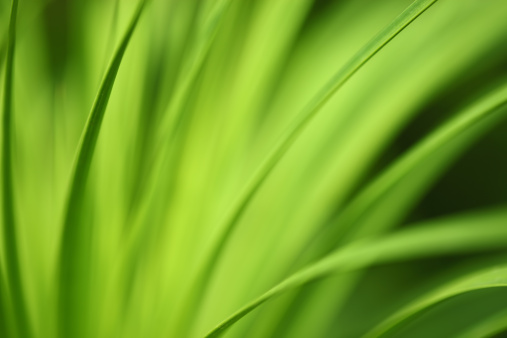 Long「Green nature background long leafs」:スマホ壁紙(6)