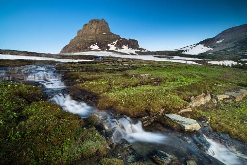 花「レイノルズ山の Logan パス、氷河国立公園」:スマホ壁紙(13)