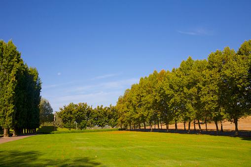 セイヨウカジカエデ「Green lawn & trees below blue sky」:スマホ壁紙(15)